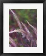 Framed Purple Plumes I