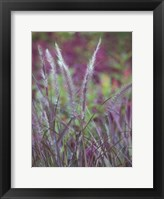 Framed Purple Plumes II