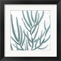 Aqua Marine I Framed Print