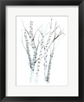 Framed Aquarelle Birches II