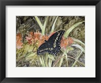 Butterfly in Nature III Framed Print