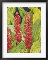 Red Tropical Flowers II Framed Print