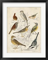 Framed Gathering of Birds I