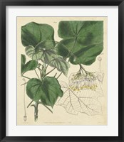 Curtis Leaves & Blooms I Framed Print