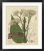 Curtis Leaves & Blooms II Framed Print