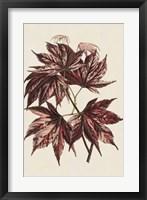 Framed Japanese Maple Leaves II