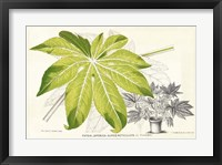 Framed Fern Leaf Foliage I