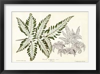 Framed Fern Leaf Foliage II