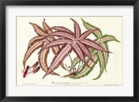 Framed Fern Leaf Foliage III