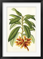 Framed Tropical Rhododendron I