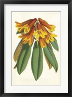 Tropical Rhododendron II Framed Print