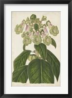 Framed Foxglove Botanical