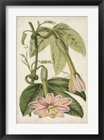 Framed Passion Flower Botanical