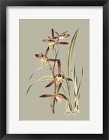 Framed Botanical Cabinet VII