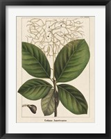 Framed Large Leaved Cotinus