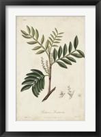Framed Medicinal Botany II