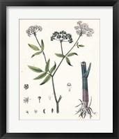 Framed Berge Botanicals II