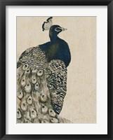 Textured Peacock I Framed Print