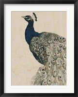 Textured Peacock II Framed Print