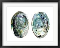 Abalone Shells I Framed Print