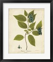 Framed Hornbeam Tree Foliage