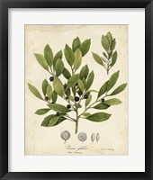Framed Ink-berry Tree Foliage