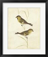 Framed Goldfinch