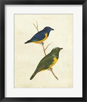Peruvian Tanager I Framed Print