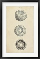 Framed Cylindrical Shells I