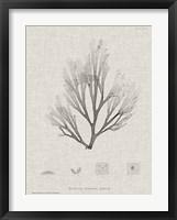 Framed Charcoal & Linen Seaweed III