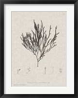 Framed Charcoal & Linen Seaweed IV