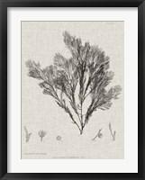 Framed Charcoal & Linen Seaweed V