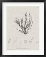 Framed Charcoal & Linen Seaweed VI