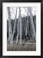 Pale Bark I Framed Print