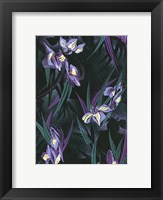 Framed Iristif