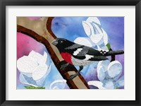 Framed Rose Breasted Grosbeak