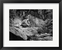 Framed Lion I