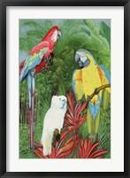 Framed 3 Parrots