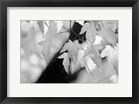 Framed Leaves and Light
