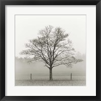 Framed Winter Tree, Cades Cove