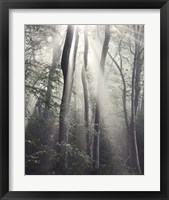 Framed Woodland Sun