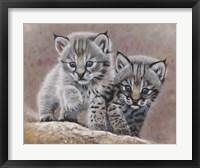 Framed Bobcat Babies