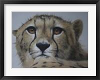 Framed Cheetah Study