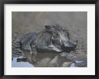 Framed Hog in Heaven