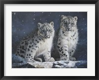 Framed Young Snow Leopards Into the Dark