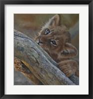 Framed Play Lion Cub