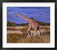 Framed Reticulated Giraffe