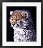 Framed Cheetah Cub
