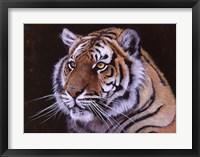 Framed Bengal Tiger