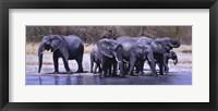 Framed Elephants Drinking